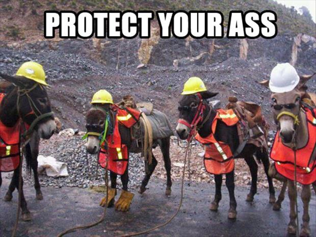 protect-your-ass